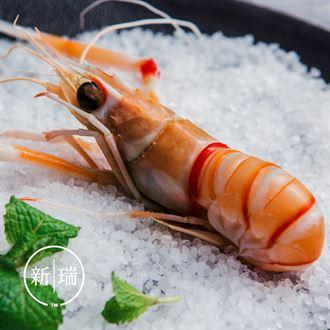 9月新货 新西兰进口鳌虾scampi斯干比小龙虾南极深海2号1KG 刺身