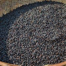 黑米 黑香米 250g五谷杂粮放心粗粮农家自产煮粥黑大米满包邮
